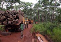 RDC : 500 camions transportant du bois rouge bloqués en Zambie