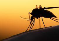 Un premier vaccin contre le paludisme d'ici 2020