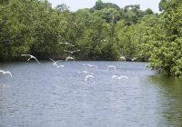 Le Gabon crée 20 aires marines protégées