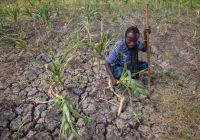 Éthiopie: La sécheresse menace la sécurité alimentaire