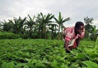 Afrique: Réduire le chômage des jeunes grâce aux activités agricoles