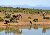 Appel à candidature pour investir dans les écosystèmes africains