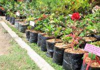 Première foire aux plants de Brazzaville : Une affaire juteuse pour les exposants