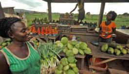 RDC : Le marché de Lufu, un véritable chemin de la croix pour les opérateurs économiques